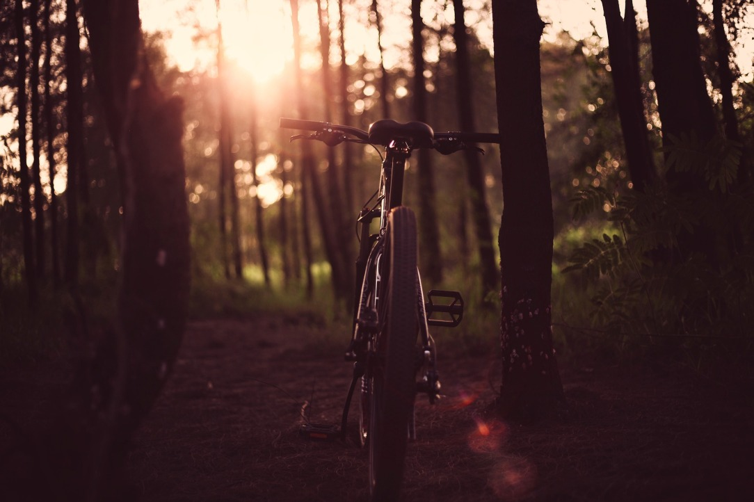 bicycle in the woods